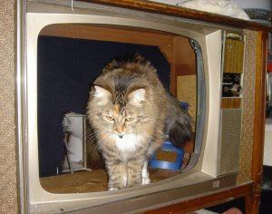 Tiny exiting a TV