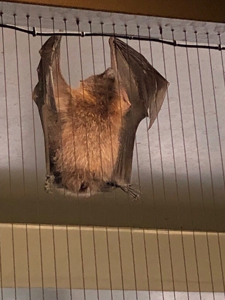 San Diego Zoo Safari Park - Bats