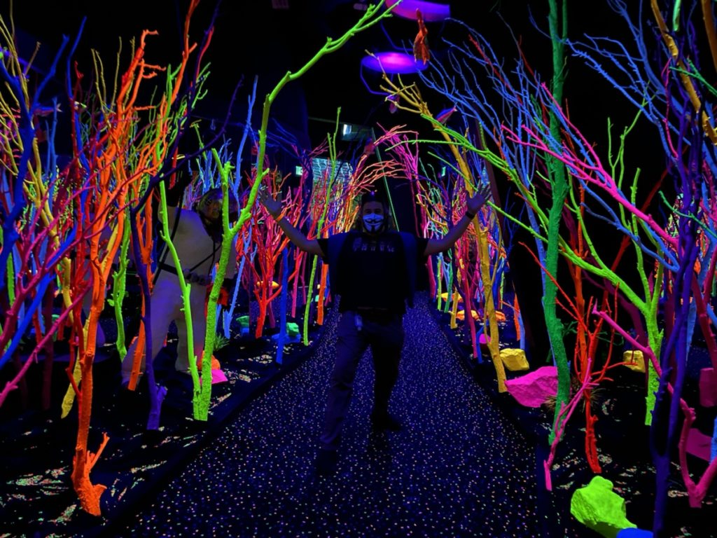 Meow Wolf - Color Forest