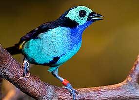 Ornithologie en fête