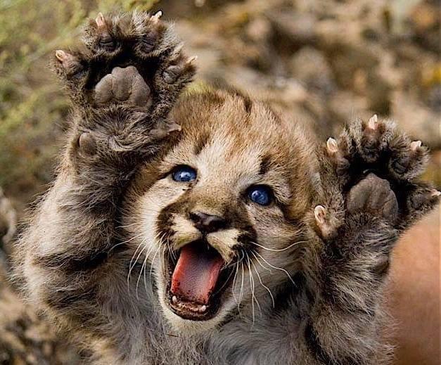 Salon des animaux exotiques de montr al 1 re dition for Salon des animaux 2017