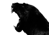 A great web designer: Panther, Cape Town, South Africa