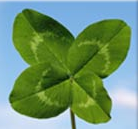 A great web designer: The Lucky Clover, San Francisco, CA