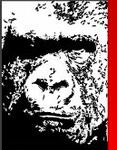 A great web designer: Gorilla Web Studio, Burlington, VT logo