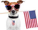 A great web designer: American Fido, LLC, Clearwater, FL logo