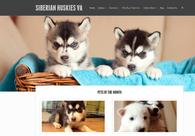 A great web design by Reston Web Design, Washington DC, DC: