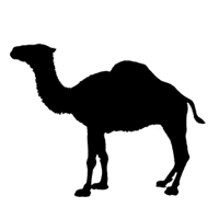 Camel Sound Effects