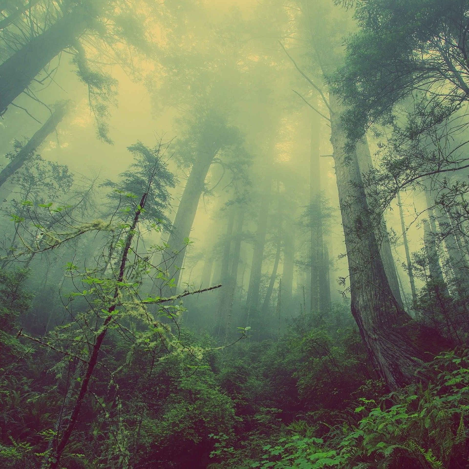 Forest Airwaves