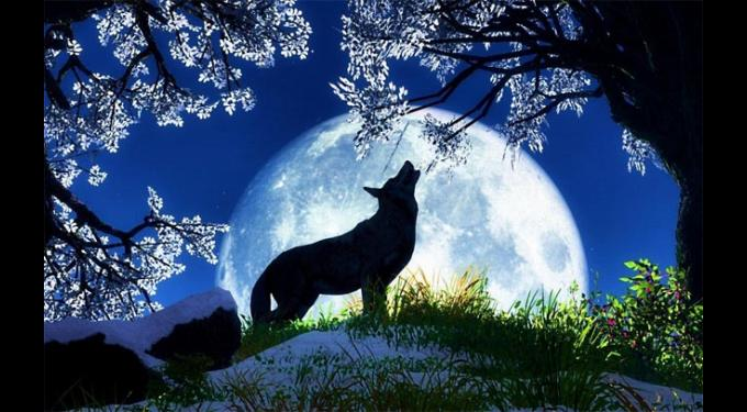 Annual Howl at the Moon