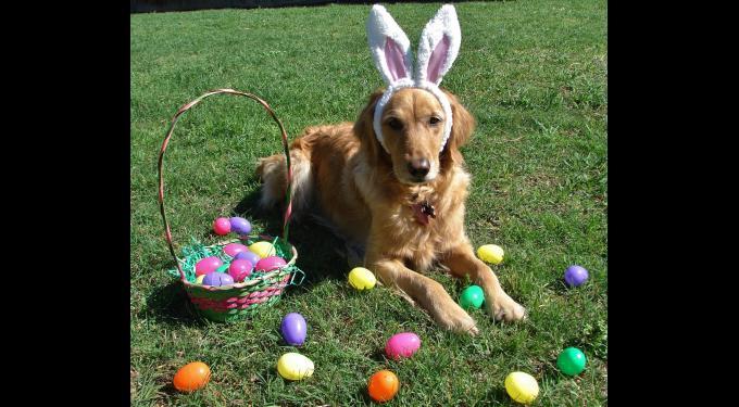 Doggie Egg Hunt