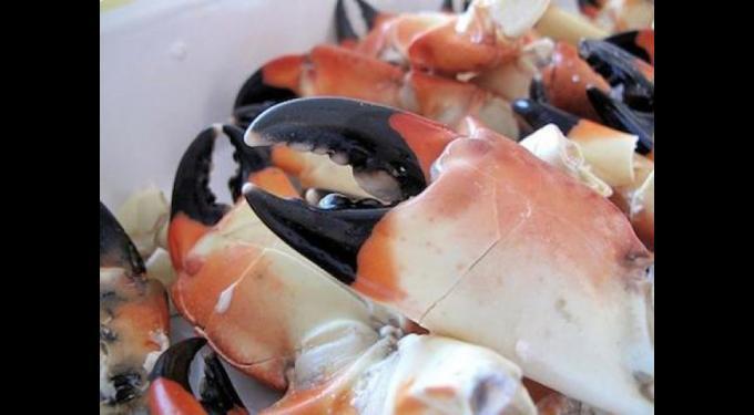 Annual Stone Crab & Seafood Festival
