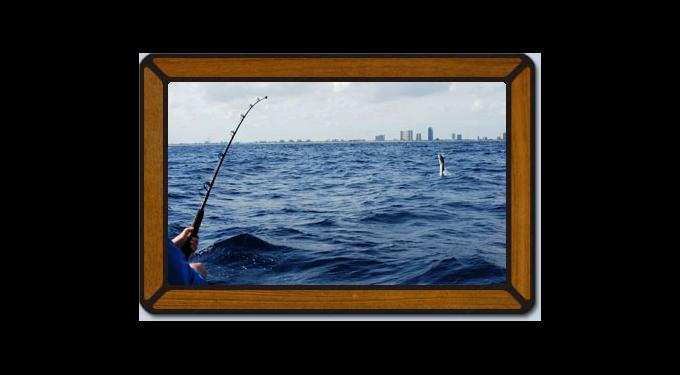 Fighting Lady Sportfishing Charters