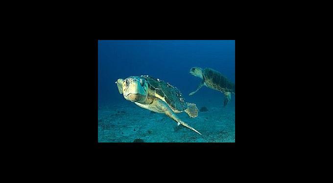 Underwater Explorers