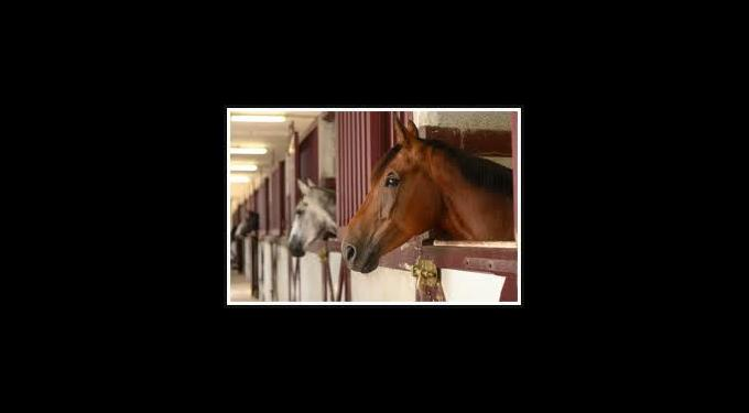 Tradewinds Park & Stables