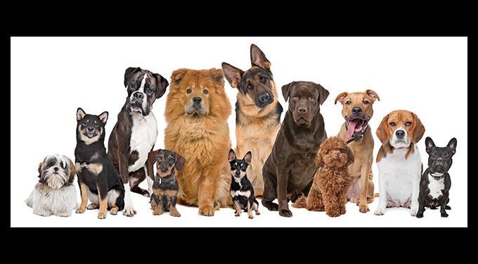 Wellington Dog Park at Greenbriar Park