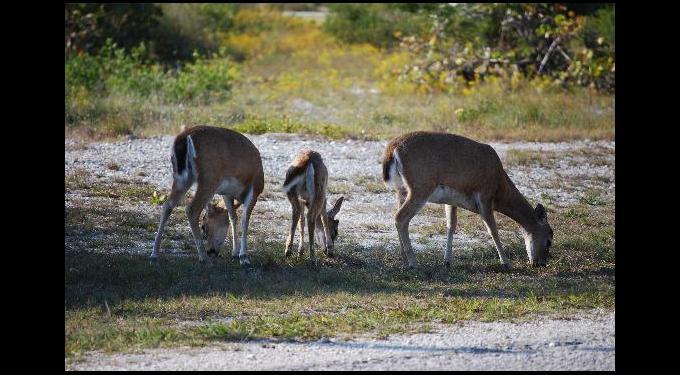 National Key Deer Refuge