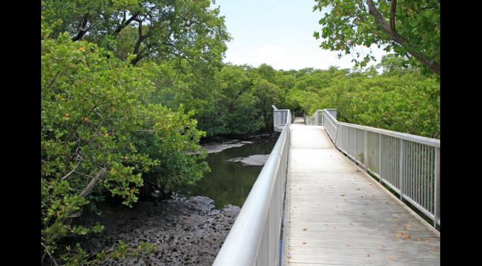 Mangrove Park
