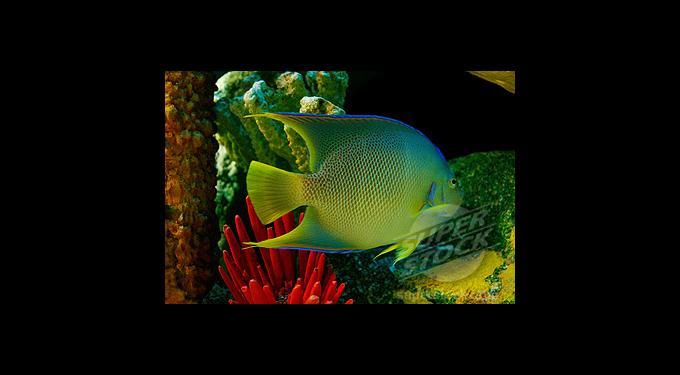 Tropical Fish Miami