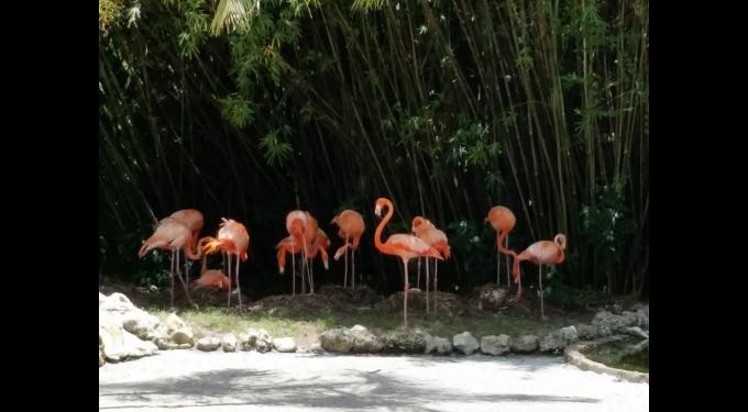 Flamingo Gardens