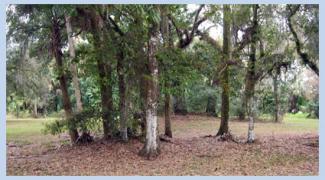 Equestrian Trails South Florida Finds