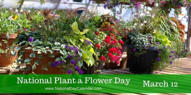 National Plant a Flower Day