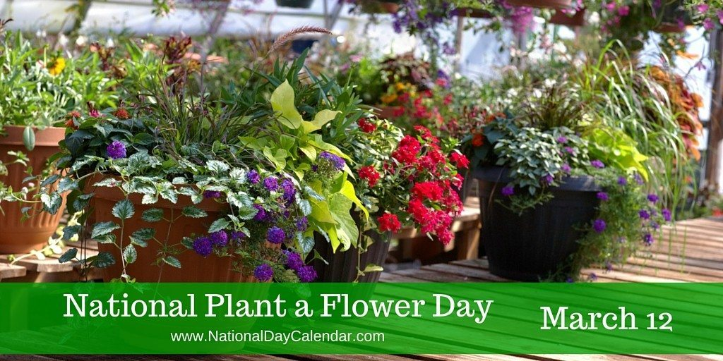 Marigolds And Daffodils Are March Flowers To Plant South Florida