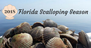 Scalloping Season