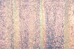Stretch Sequins (Pink/Pearl)