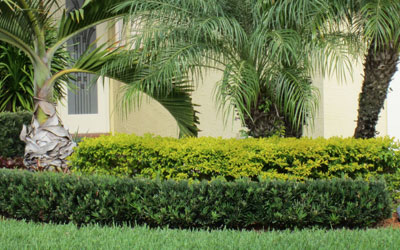 Decorative And Privacy Hedges