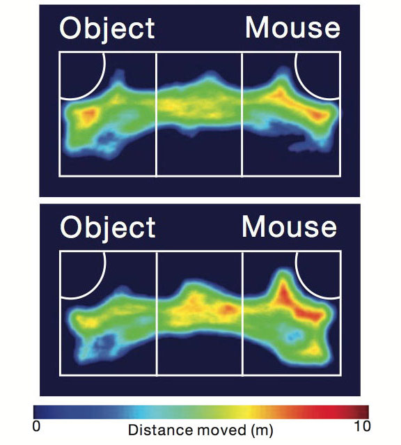 Social slackers: In a three-chamber test of social interactions, control mice (bottom) spend more time interacting with a new mouse than with an object, whereas mice with a mutation in SHANK2 (top) split their time between the two.