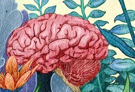SI_brain