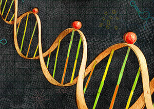 Hitting high confidence Learn more about a selection of the strongest new autism genes: CHD8 DYRK1A GRIN2B SCN2A ANK2