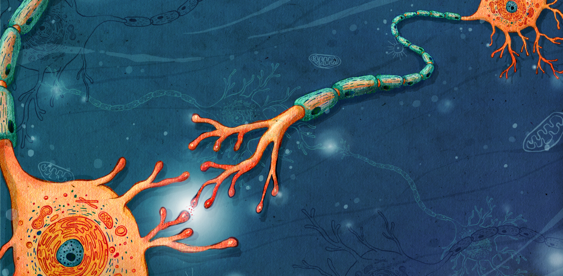 Mystery Gene Uncovered In Autism >> Mystery Gene Uncovered In Autism Studies May Steer Neurons