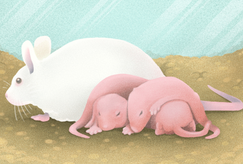 Next generation: Female mice may help explain why autism can be so different in men and women.