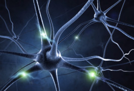 Under fire: Deleting MeCP2 in excitatory neurons lowers the rate at which some neurons fire. ©iStock.com/Sashkinw