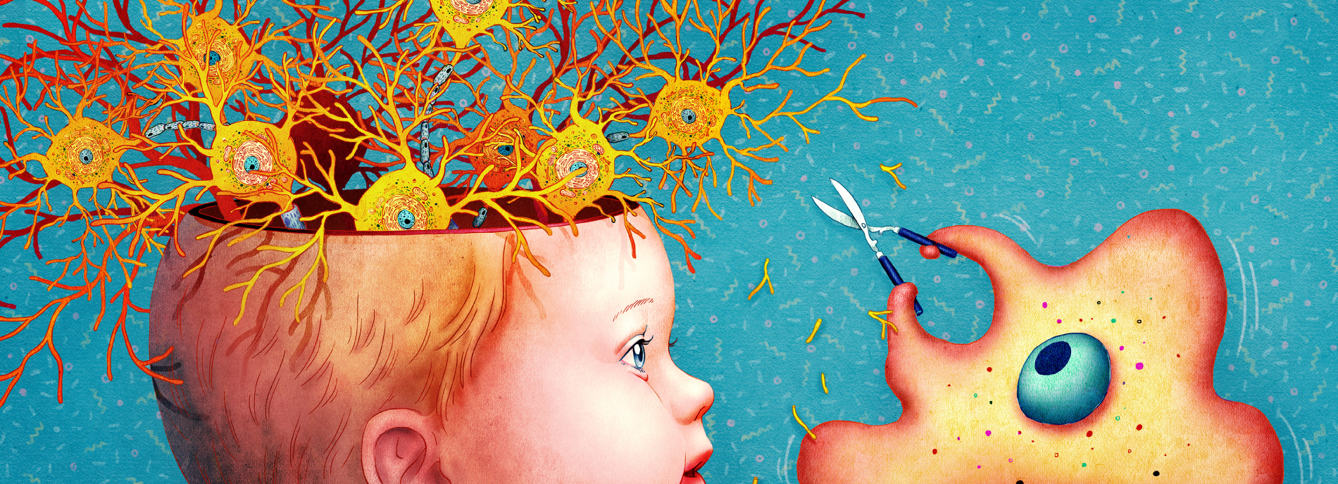 If Genes Dont Turn Off Brains Wiring >> The Brain S Secret Gardeners Spectrum Autism Research News