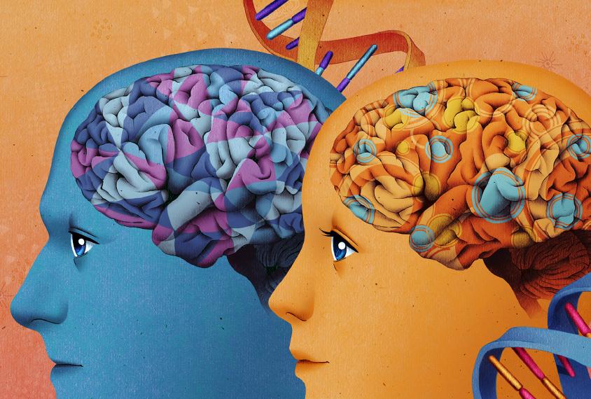 Gene Expression Patterns May Underlie >> Gene Expression Patterns May Underlie Autism S Gender Bias