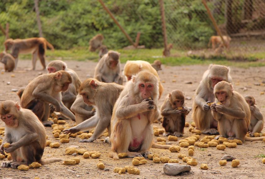 20160621-monkeyDeepDive.eat.844