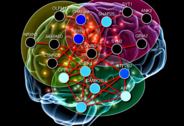 Key clusters: New software that maps how groups of genes interact in the brain implicates certain molecular pathways in autism.