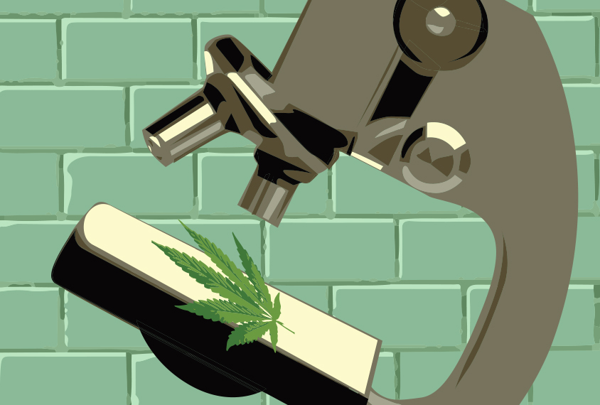 marijuana_spot_image