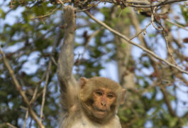 Neural fireworks: Armed with molecular sensors, neurons light up in a rhesus macaque's brain as it moves its arm.Bernd Rohrschneider / Science Source