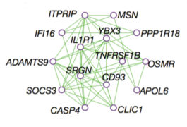 Remodeled matrix: A network of immune system genes may be overactive in the brains of people with autism.