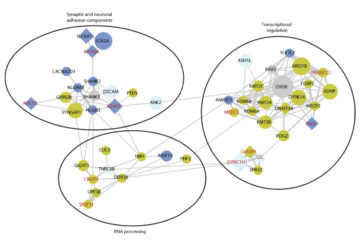Role call: Most of the genes newly linked to autism cluster into functions known to be important in the condition.
