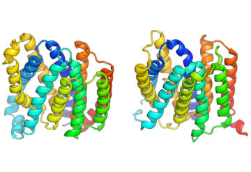 Shaping up: The structure of a protein produced by a computer program mirrors the actual structure as revealed by X-ray crystallography.