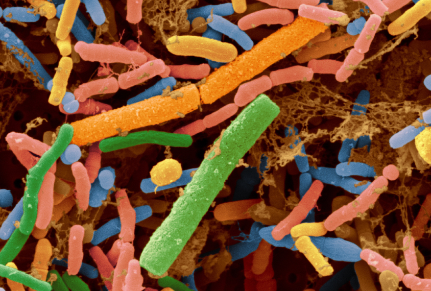 Microbial Transplant May Treat Gut >> Microbial Transplant May Treat Gut Social Problems Spectrum