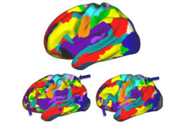 Individual differences in brain structure parallel variations in brain activation when people move their tongue or feet.