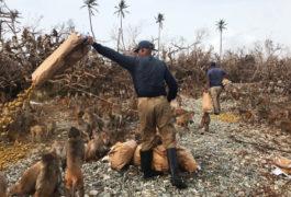 Julio Resto, lead caretaker on Cayo Santiago, dumps a bag of monkey chow. The storm leveled feeding corrals on the island.