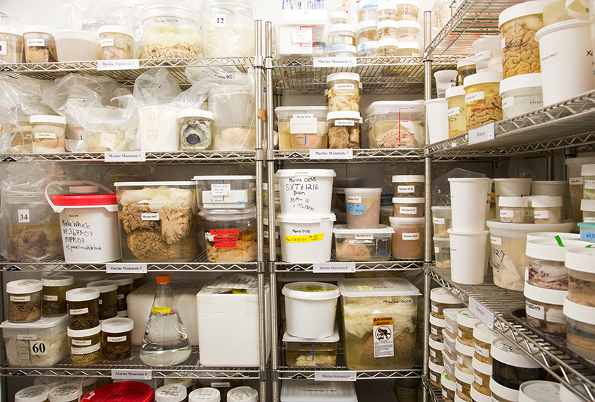 Brain specimens in storage
