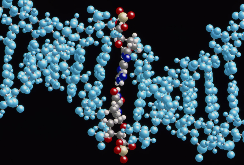 A new enzyme fusion can swap out single base pairs — the rungs in DNA's ladder-like helix.