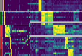 marker genes in cells